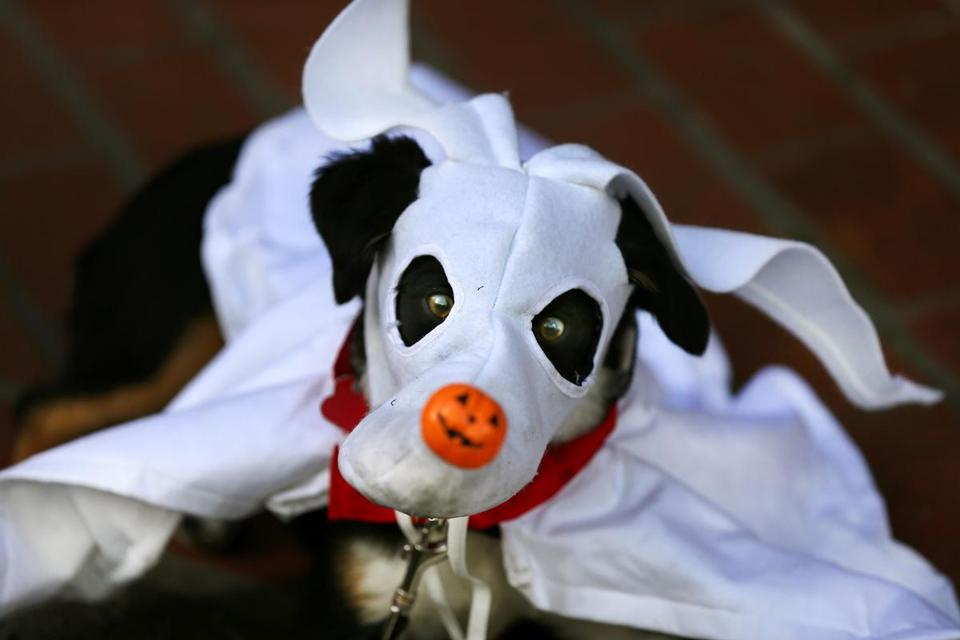 Dudley, dressed as Zero Skellington from the Nightmare Before Christmas, won the scariest costume