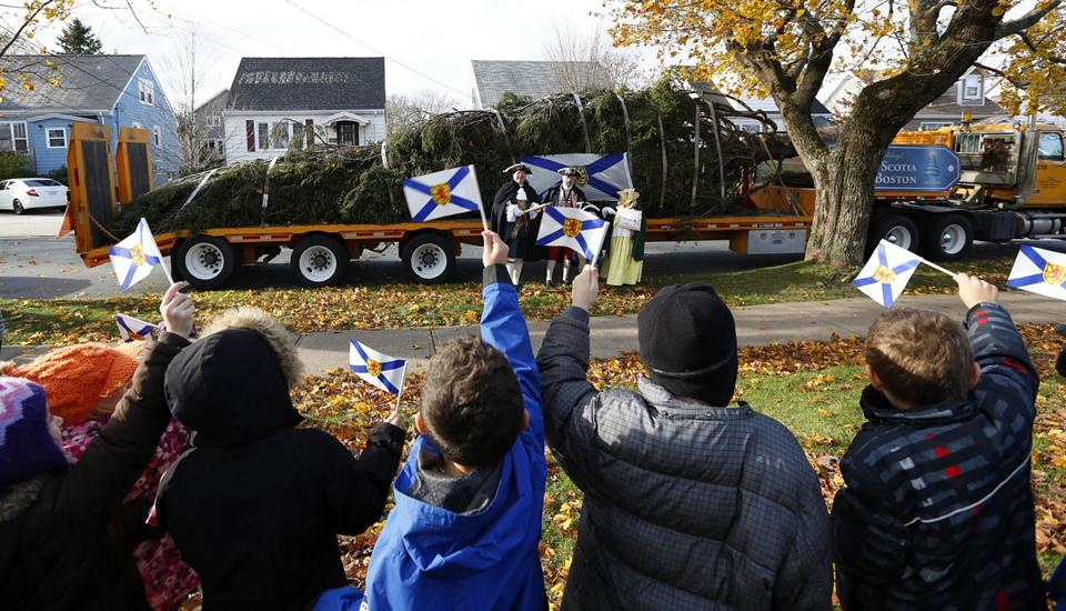 the christmas tree gifted by nova scotia to boston has been selected the boston globe - The Christmas Tree
