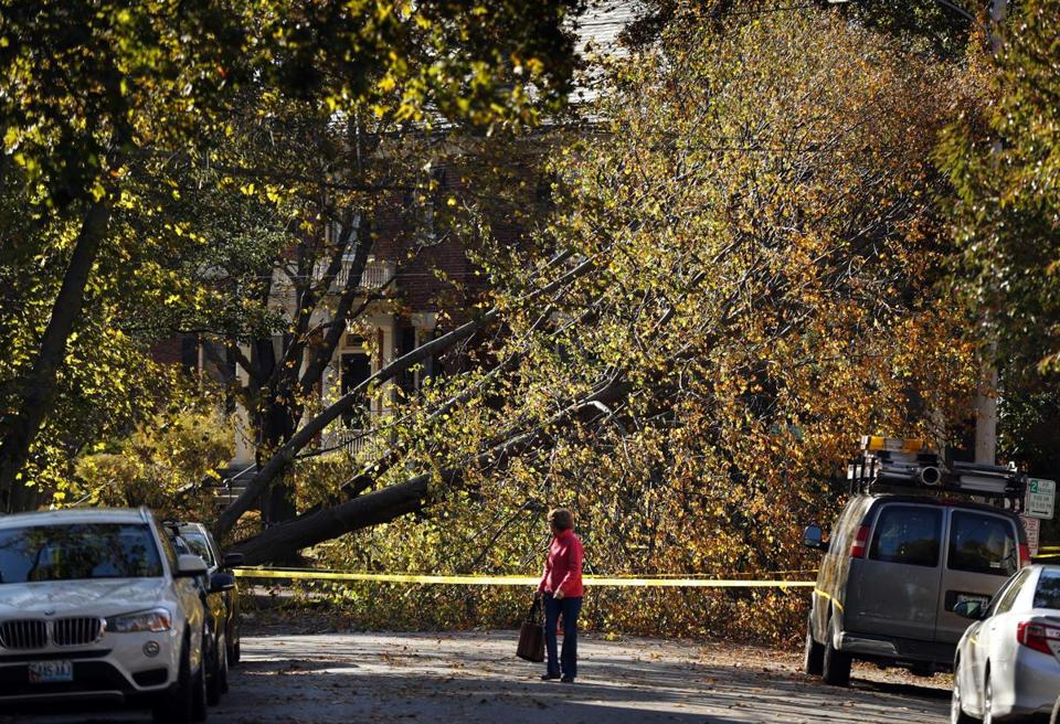 A woman walked down a street blocked by a storm-toppled tree in Maine.