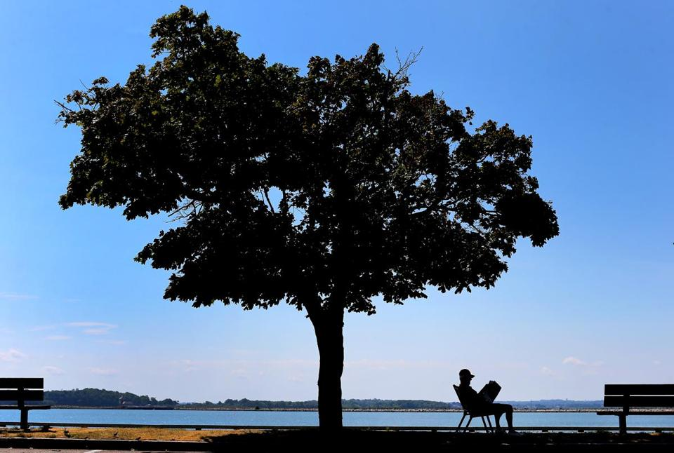 A man found a cool spot under a tree on the sidewalk of Day Boulevard in South Boston during the summer.