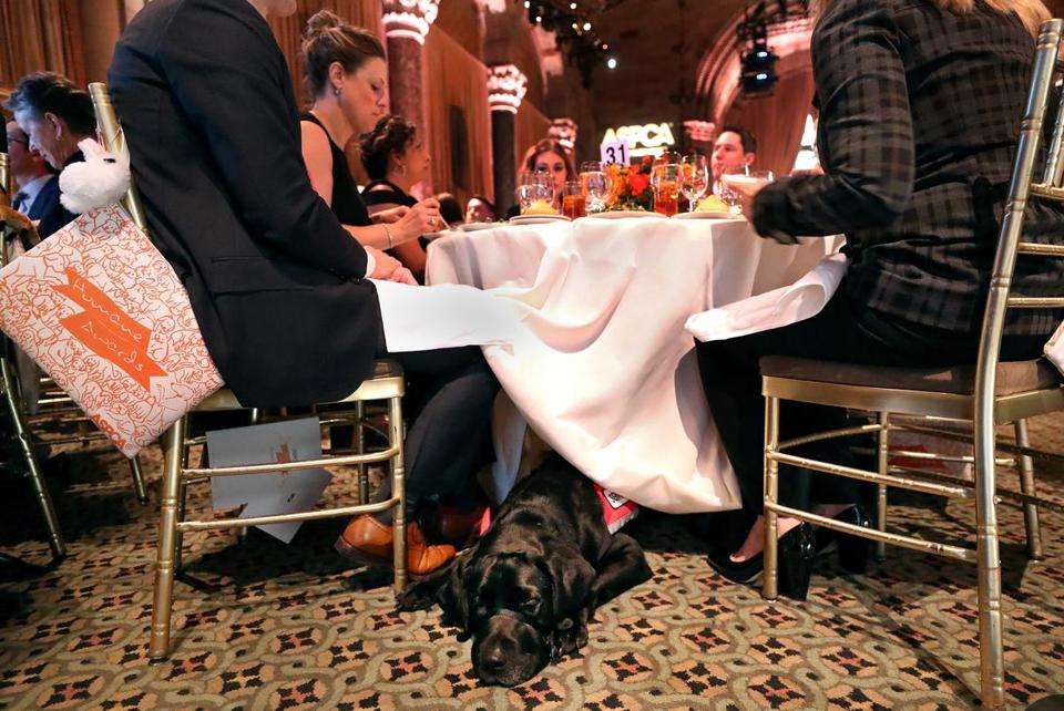 At the ceremony, Rescue lay under the table in obedient silence with his head peeking out from the tablecloth.
