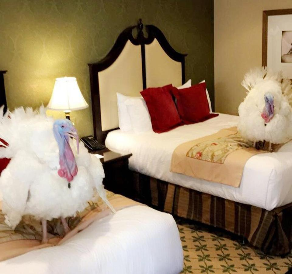 Two turkeys set to be pardoned by President Trump are shown in a Washington hotel.
