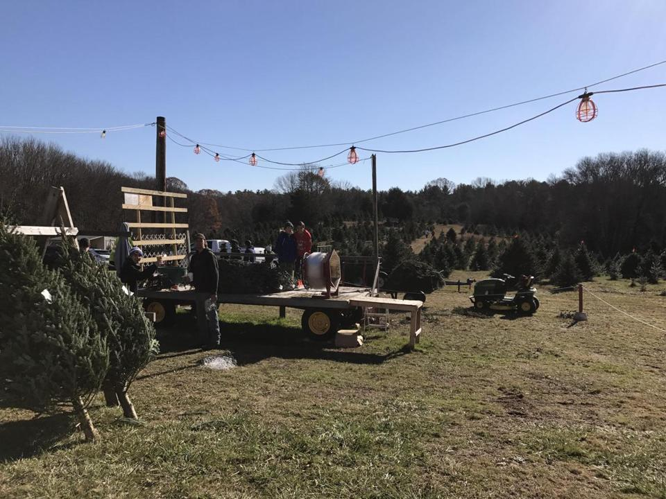 Mass. Christmas tree farms gearing up for busy season - The Boston ...