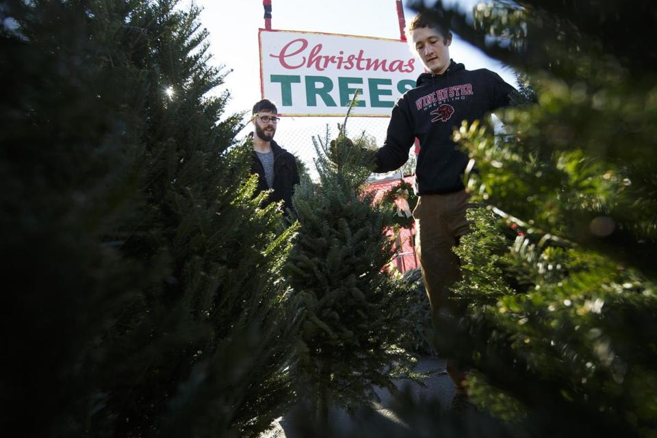 Quinn Gregory of New York (right) helped Alex Woodruff of Brighton select the perfect Christmas tree last November.
