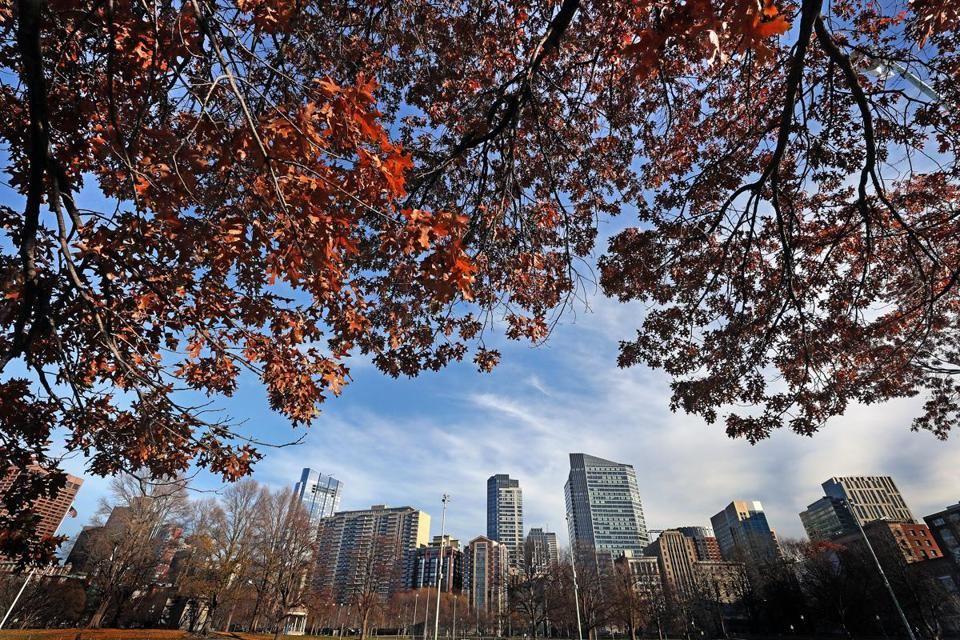 A view of trees on Boston Common with many leaves still on trees.