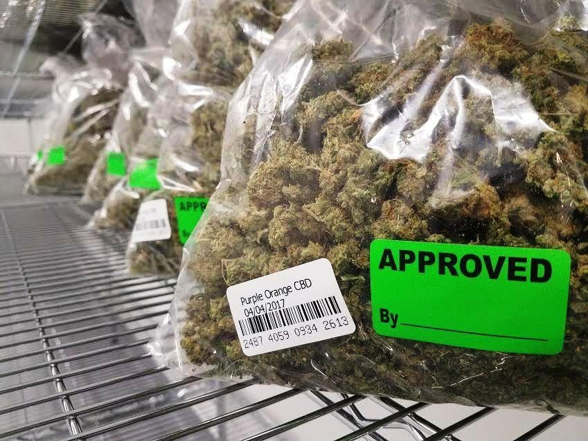Recently harvested medical marijuana that has been tested and approved is ready for clients at the Healthy Pharms facility in Georgetown, which will open May 8. (Healthy Pharms)