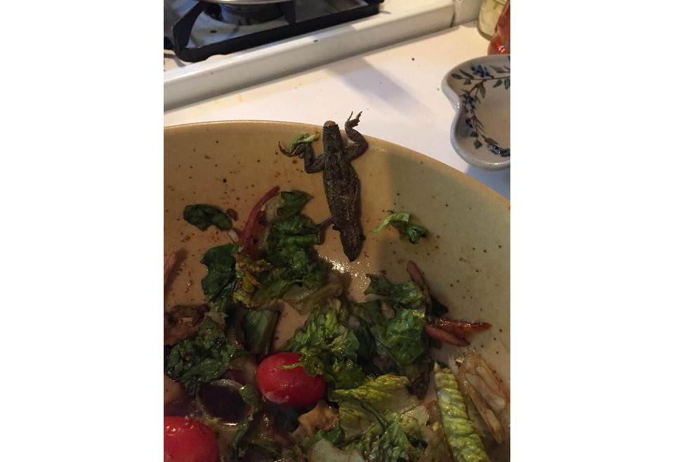 A Maine woman claims she found a dead lizard in her salad after purchasing romaine lettuce from a supermarket in New Hampshire.