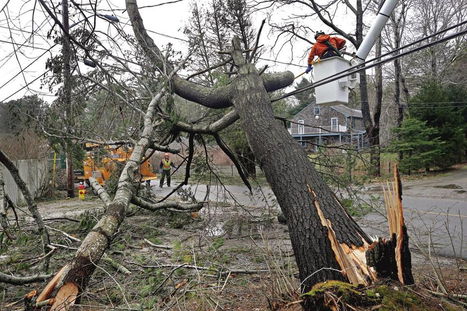 Town of Duxbury employees removed a tree from a power line on Monday.