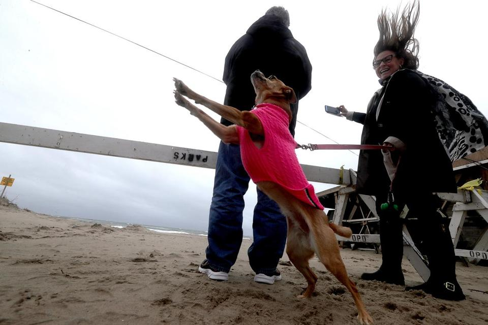 Kathy Kineke of East Orleans and her dog Jo Jo braved the winds on Nauset Beach on Thursday.
