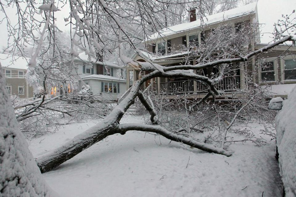 Tree limbs and wires down in Lexington on Thursday.