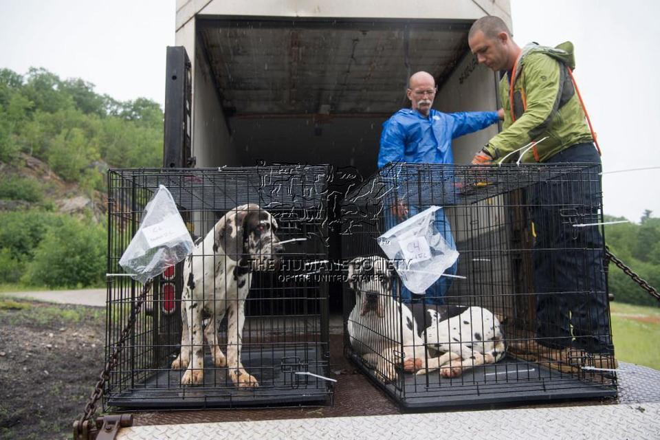 Humane Society Rescue Team Volunteers John Sidenstricker Left And John Peaveler Helped Remove Dogs