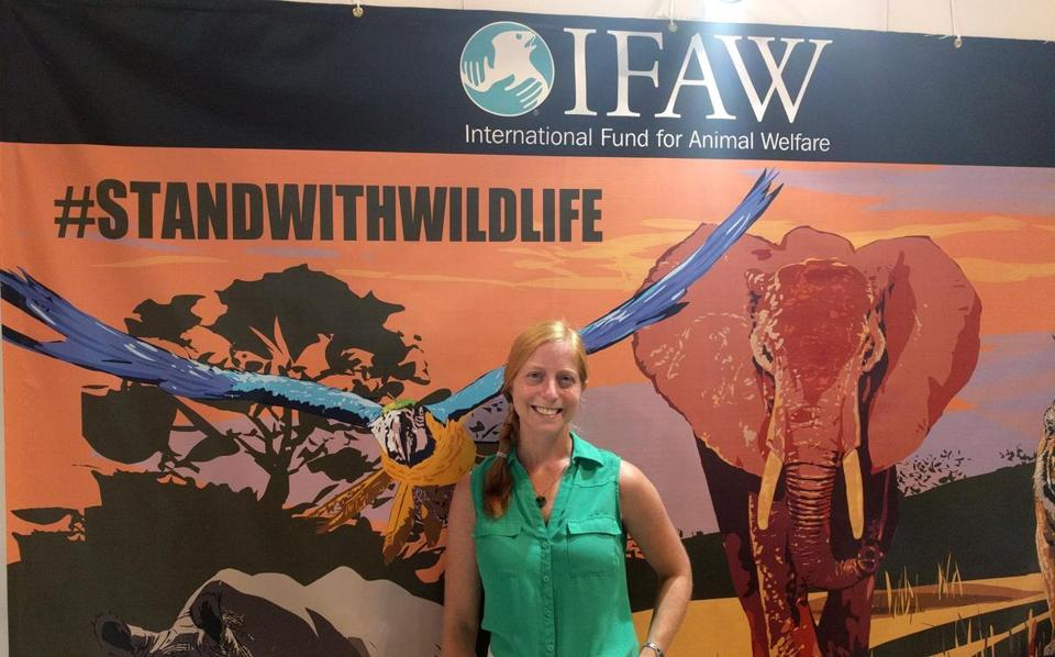 Tracy Bain, senior programs officer for the wildlife crime program at the International Fund for Animal Welfare, is based in Yarmouth Port.