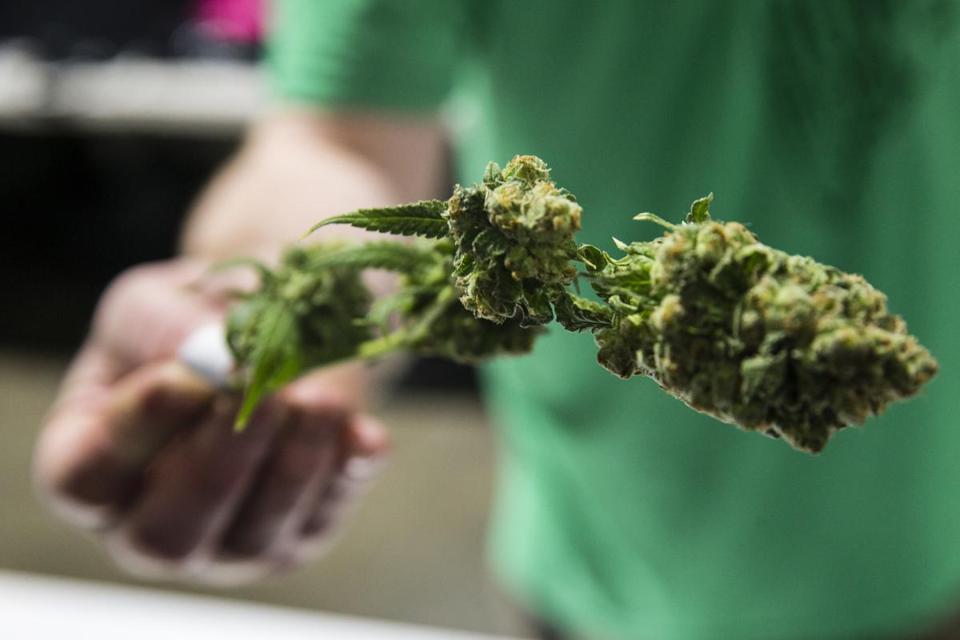 Recreational marijuana licensing to begin Monday - The Boston Globe