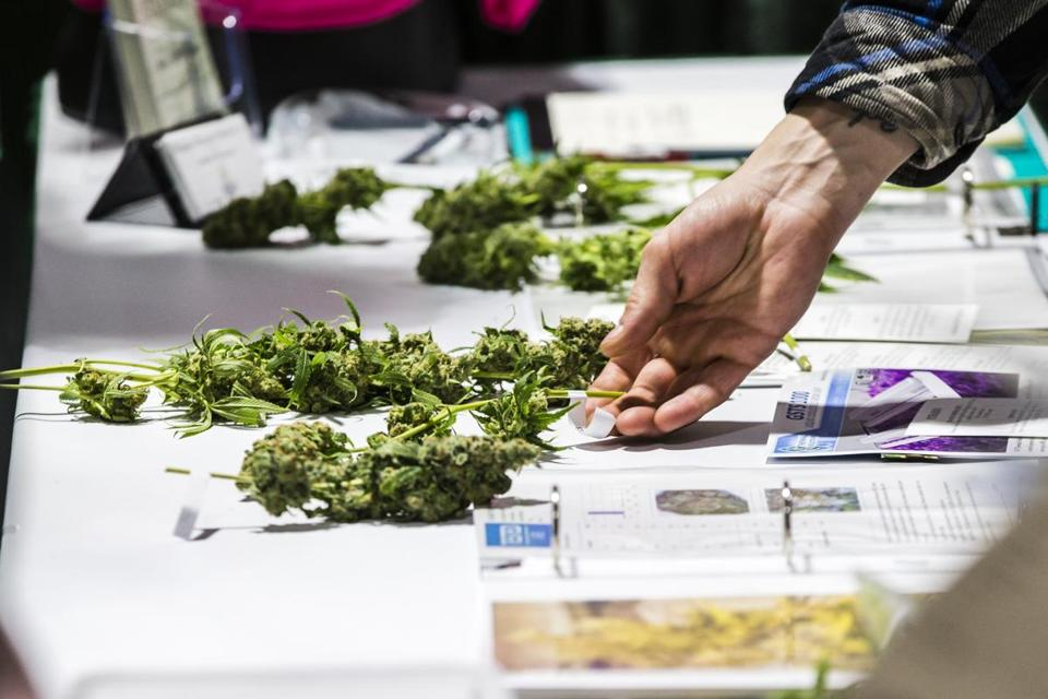 A visitor picked up marijuana samples on display during the 4th Annual New England Cannabis Convention in March.
