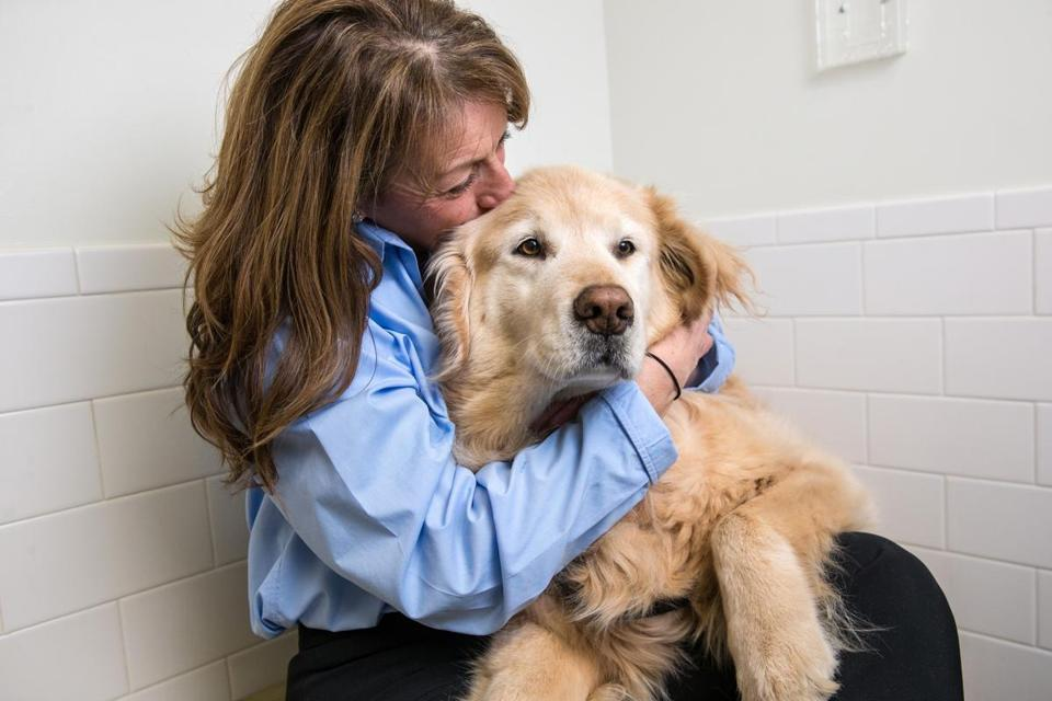 04/02/2018 NORTH GRAFTON, MA Gina Alongi (cq) poses with her golden retriever Drambuie at the Cummings Veterinary Medical Center at Tufts University in North Grafton. (Aram Boghosian for The Boston Globe)