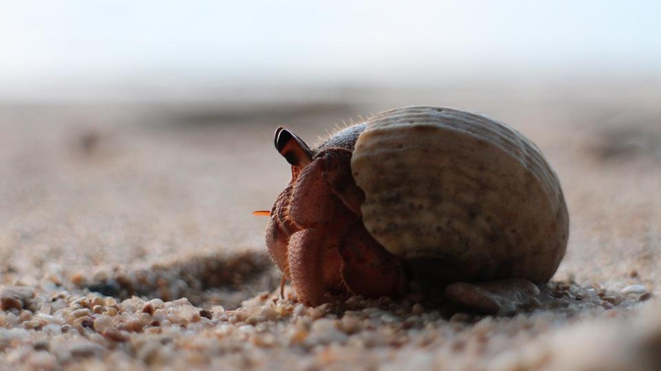 Hermit Crab Habitat Setup: Hermit Crab Care and Habitat Set-up - Kindle edition by Mystery Adams. Download it once and read it on your Kindle device, PC, phones or tablets. Use features like bookmarks, note taking and highlighting while reading Hermit Crab Habitat Setup: Hermit Crab .