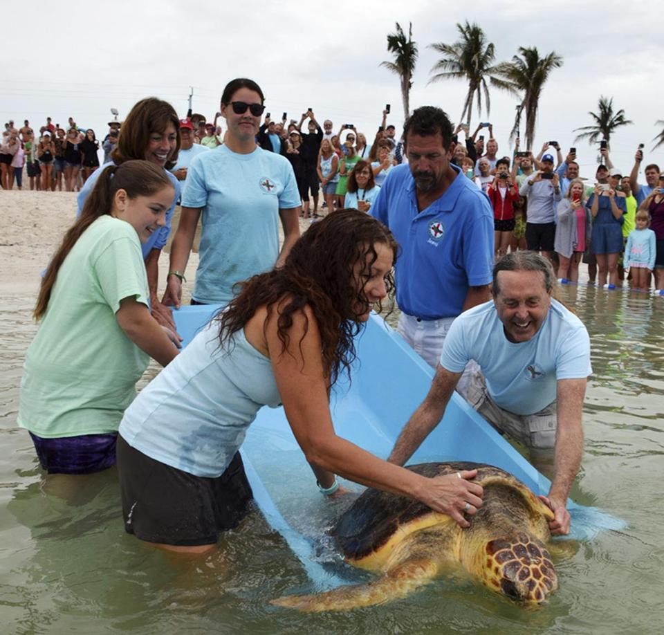 "Turtle Hospital manager Bette Zirkelbach (front left) and founder Richie Moretti (front right) released ""Judy"" Saturday."