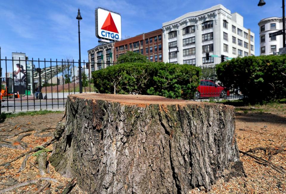 A stump marks where a tree was removed on the Commonwealth Avenue mall.