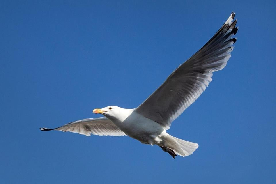 seagull in gloucester snatches wallet from man on the street the