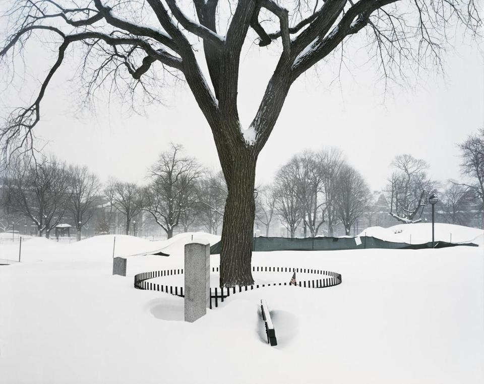 "22kayafas Bruce Myren, ""Washington Elm (View #24) during a winter storm,"" 2015/18 © Bruce Myren, courtesy of the artist and Gallery Kayafas. Image courtesy of Gallery Kayafas."