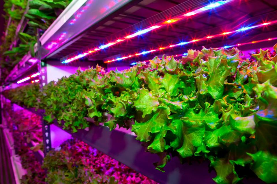 FreshBox Farms grows its leafy greens vertically in a hydroponic system indoors. The company says it does not use pesticides or herbicides.