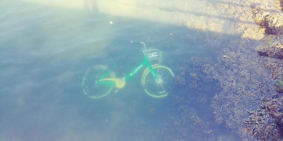 14waterbikes -- A LimeBike was spotted floating in the water in East Boston this week. (Steve Holt)