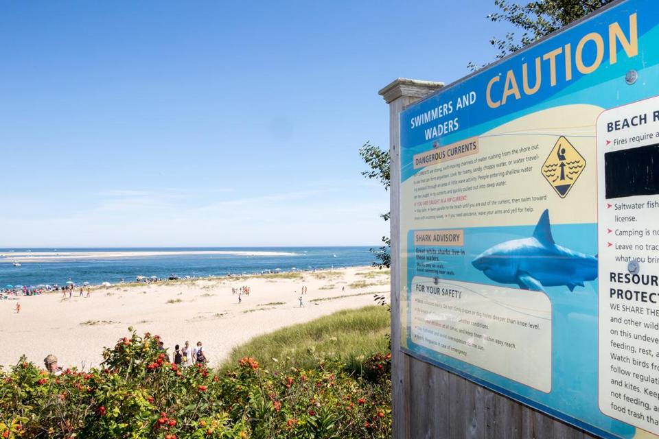 A sign warns beachgoers of the presence of great white sharks at Lighthouse Beach in Chatham.