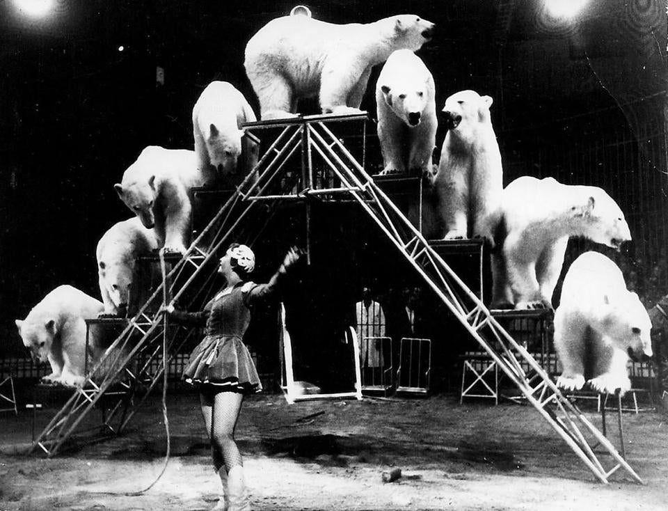 A photo provided by the Archive of Laurens Thoen of Doris Arndt with a pyramid of polar bears, her most popular act. Arndt, whose ability to command big cats and bears made her one of Europe's best-known circus animal trainers in the 1950s and '60s, a time when men dominated such acts, died on June 21, 2018, in Berlin. She was 88. (Archive of Laurens Thoen via The New York Times) -- NO SALES; FOR EDITORIAL USE ONLY WITH OBITUARY SLUGGED OBIT ARNDT BY MELISSA EDDY OF JULY 30, 2018. ALL OTHER USE PROHIBITED. --