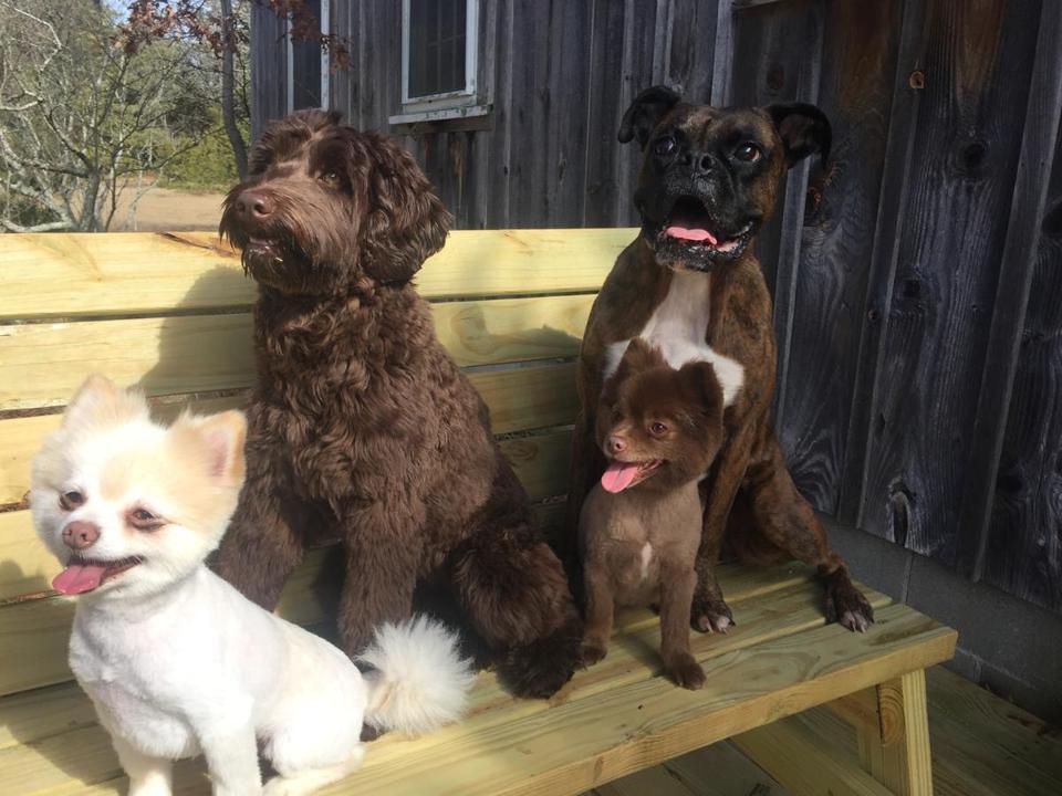 Dog Park Wollaston