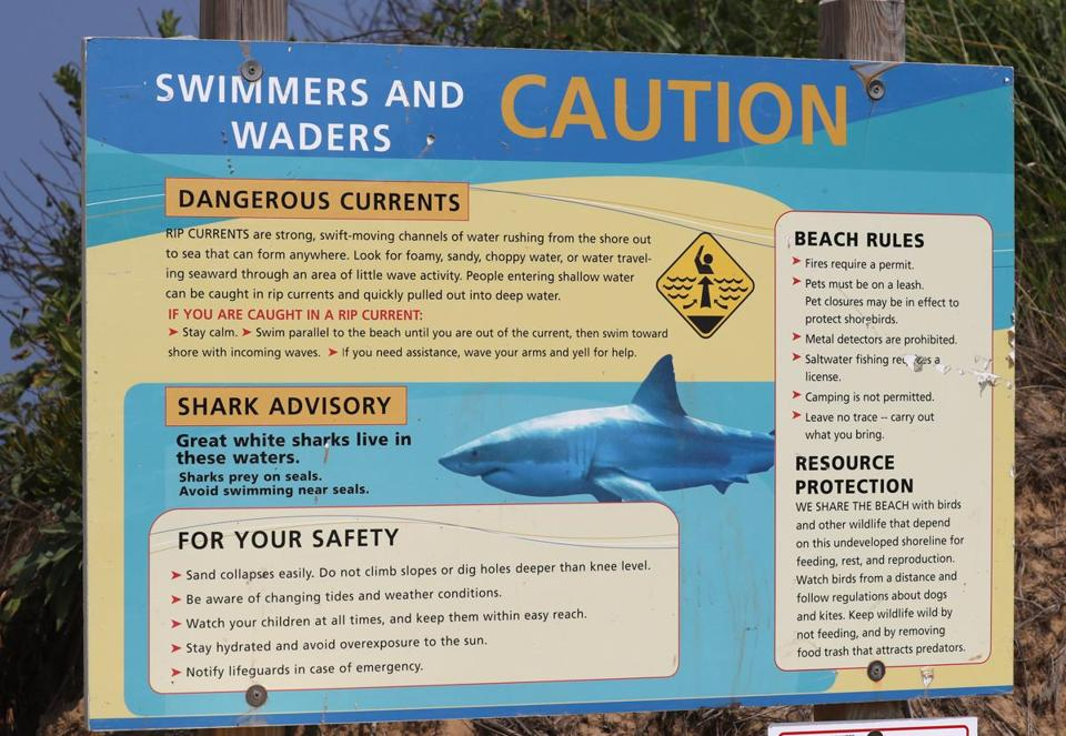 Great white shark reportedly spotted in Buzzards Bay on Sunday - The ...