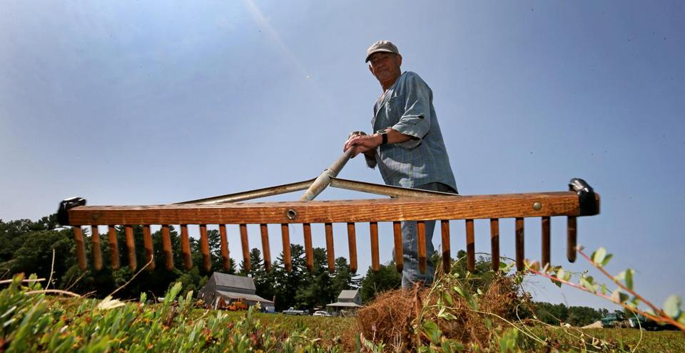 Norberto Lugo worked a bog with a cranberry rake at Flax Pond Farms in Carver.