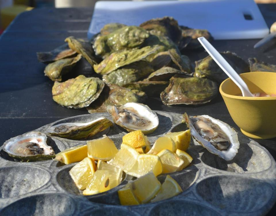 Nonesuch Oyster Farm tour guests finish with fresh oysters.