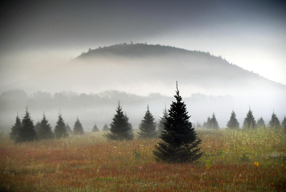 FILE- In this Sept. 27, 2017, file photo fog drifts through a Christmas tree farm near Starks Mountain in Fryeburg, Maine. Amazon plans to sell and ship fresh, full-size Christmas trees this year. They'll go on sale in November and be sent within 10 days of being cut. Amazon says they should survive the shipping fine. (AP Photo/Robert F. Bukaty, File)