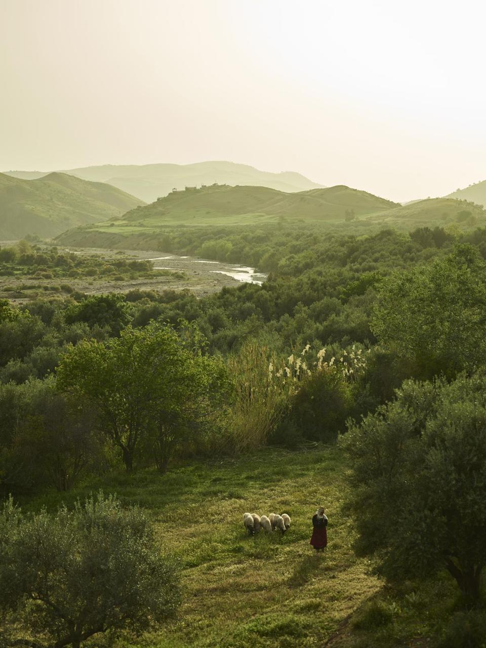 A shepherd tending a flock in Morocco's Ourika Valley.