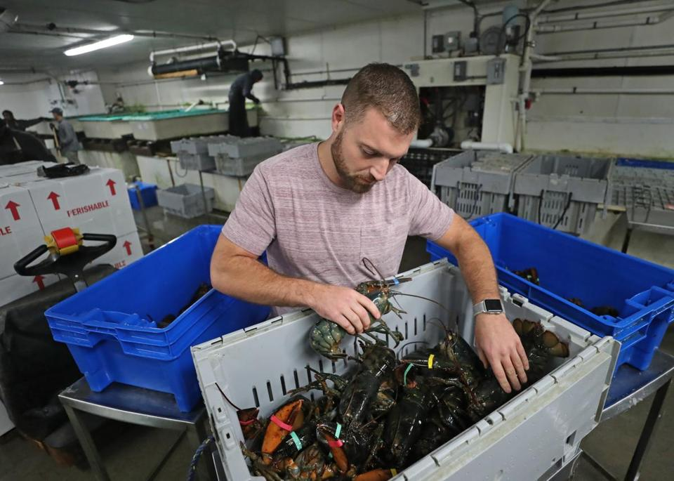 Matt Egan, a salesman for Boston Lobster Company, says the toughest part of his trade is anticipating demand.