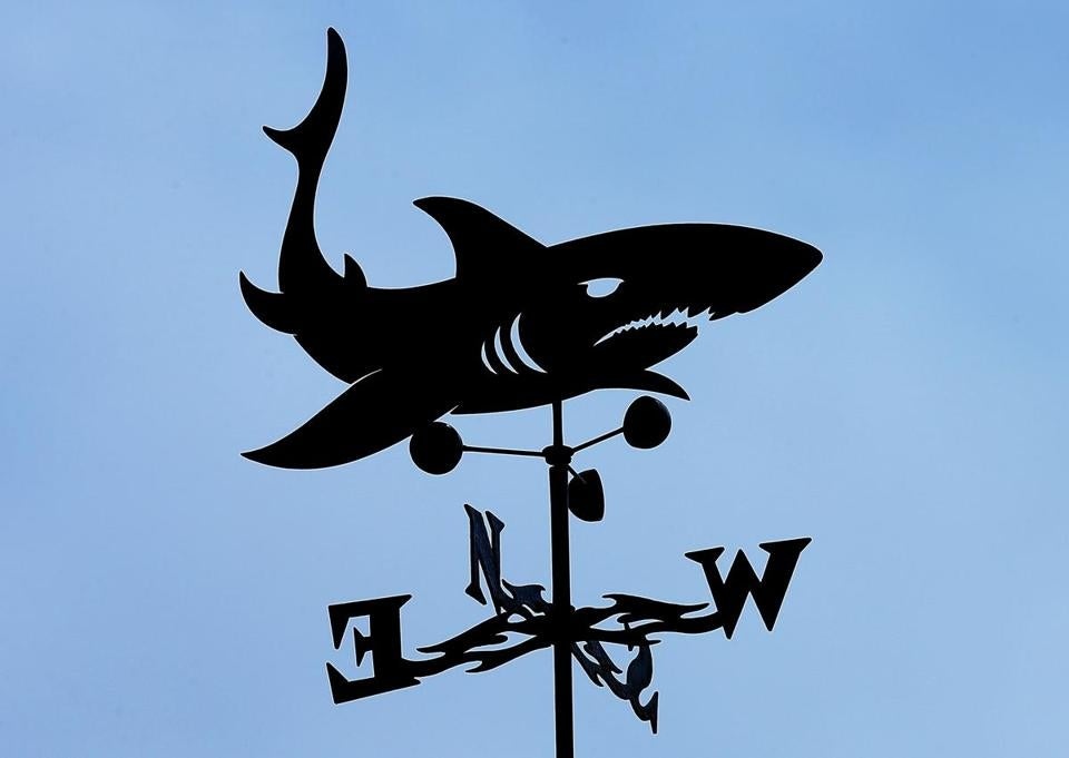 Orleans-09/20/18 How will the shark attack death affect Cape Cod's embrace of everything shark. A shark weathervane atop a totem pole of signs at Nauset Beach. Photo by John Tlumacki/Globe Staff(business)