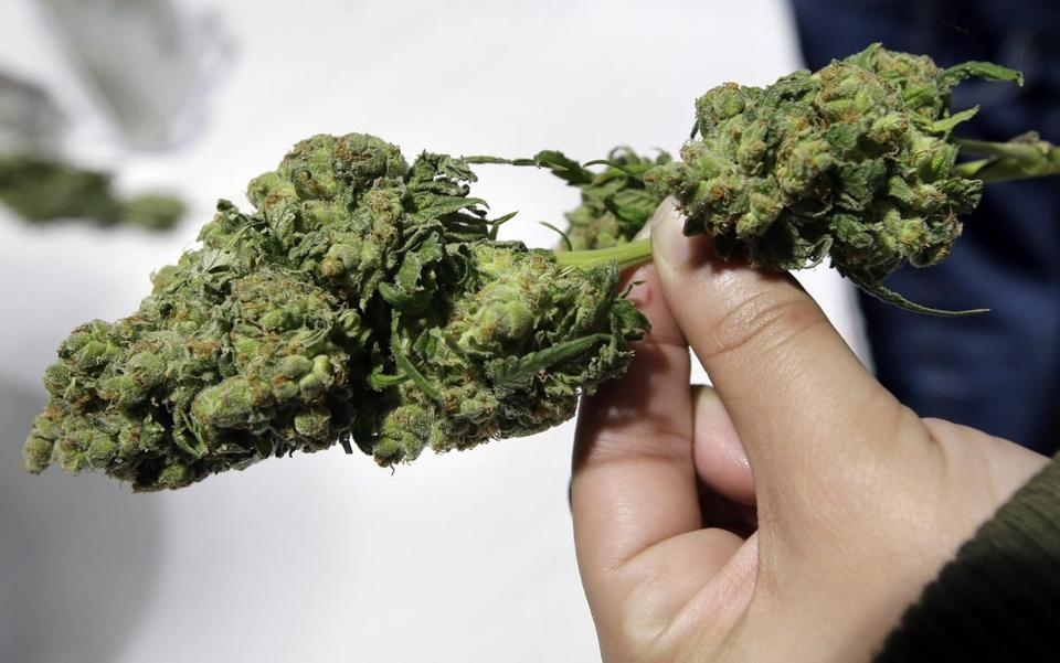 Newton voters in November will face two ballot questions related to recreational marijuana.