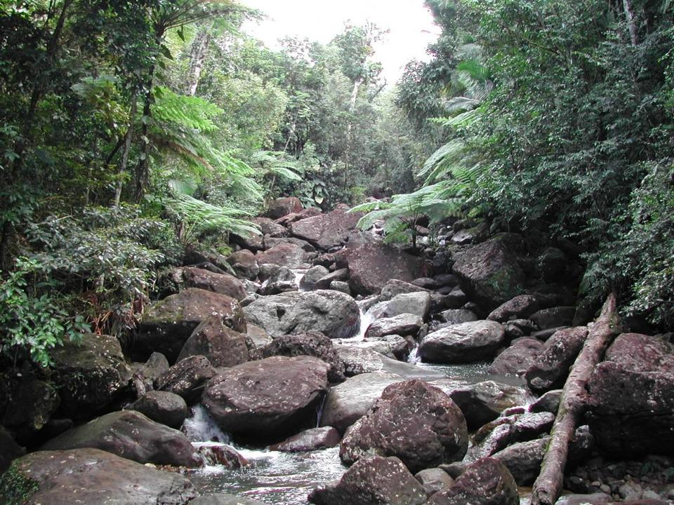 Aquatic sensors are used in streams like this one, Quebrada Sonadora, which is one of the study sites in the Luquillo Mountains of Puerto Rico, where researchers monitored nitrate levels before and after Hurricanes Irma and Maria.