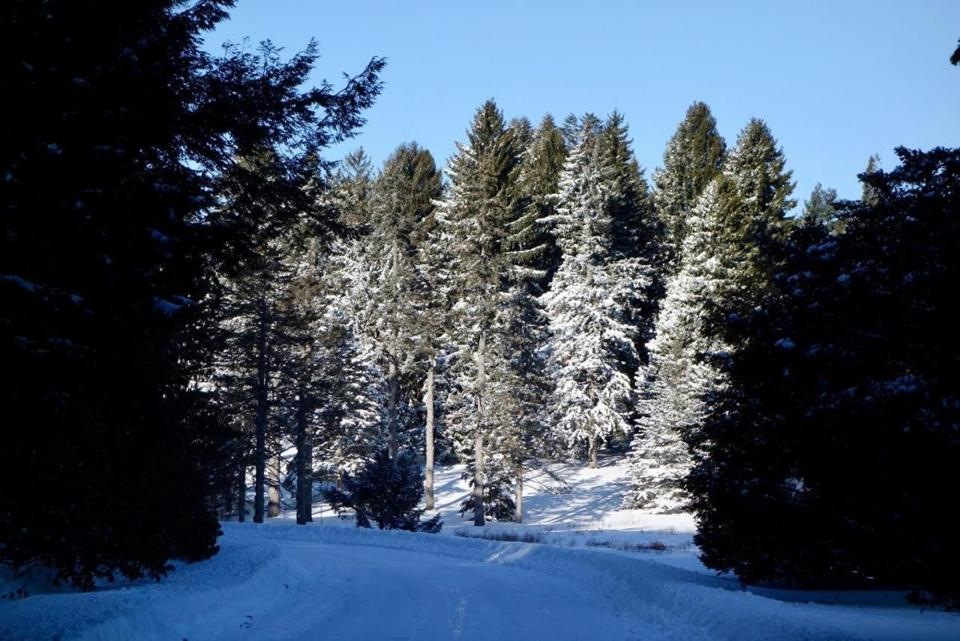 In deep winter, trees keep on giving