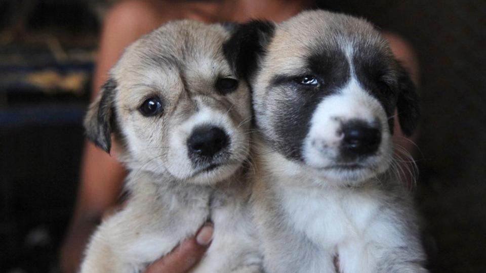 Britain Bans Pet Shops From Selling Puppies And Kittens The Boston