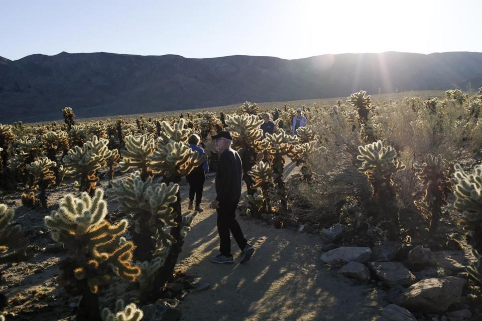 Large groups continued to pour into Joshua Tree National Park in California on Sunday despite the federal government's partial shutdown. Park officials kept the gates to the park open over the holiday weekend, allowing visitors to enter without paying $30 per-vehicle entrance fee. MUST CREDIT: Washington Post photo by Nick Kirkpatrick