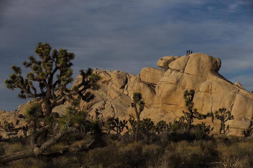 JOSHUA TREE, CA - JANUARY 8, 2019: Rock climbers enjoy the scenery at Joshua Tree National Park on January 8, 2019 in Joshua Tree, California. The park may temporarily close on Thursday because of the government shutdown. (Gina Ferazzi/Los AngelesTimes) MUST CREDIT