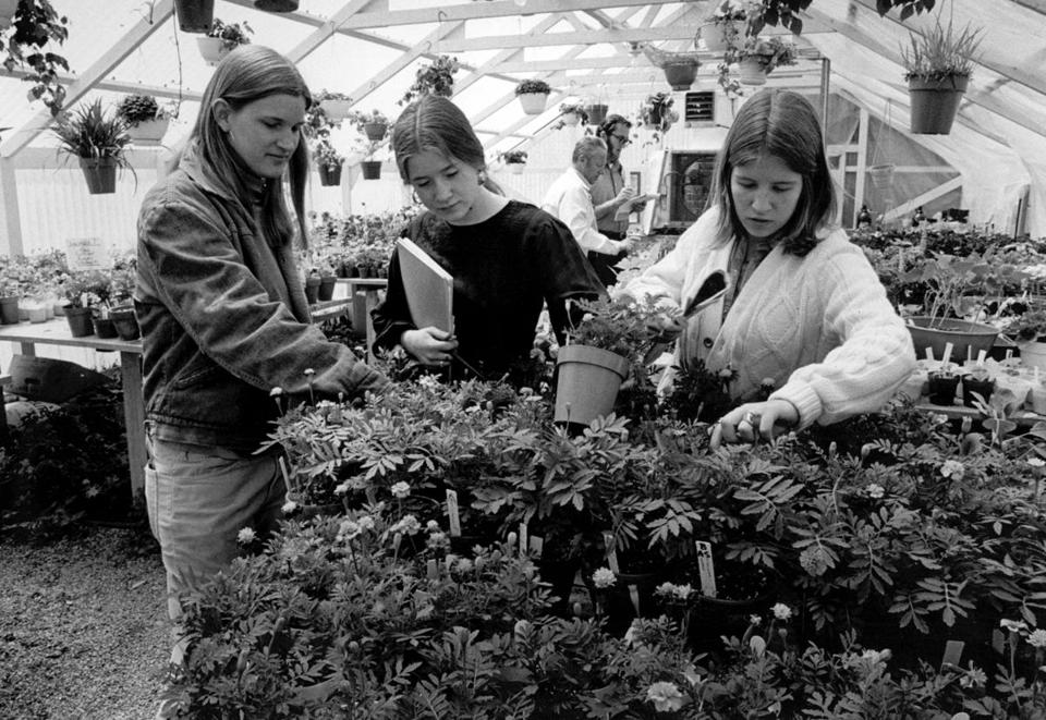 Students worked in the greenhouse, in 1976, at Hampshire College, which encourages educational experimentation.