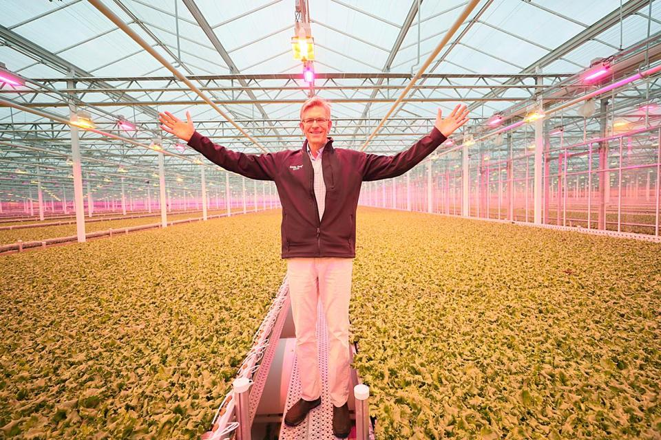 Little Leaf Farms founder Paul Sellew stands amid lettuce growing in the company's greenhouse.