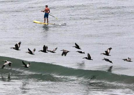 Blake Denham, 16, of Wenham, paddleboards past pelicans while on spring break in North Myrtle Beach, S.C., April 19, 2012.