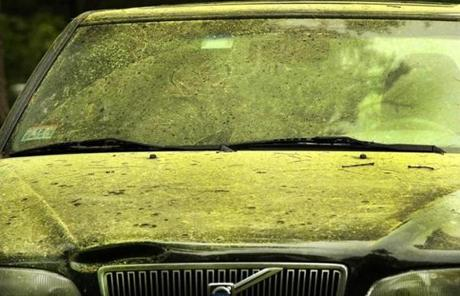 Who Owns Volvo >> Pine pollen in Boston, suburbs wears on residents' health ...