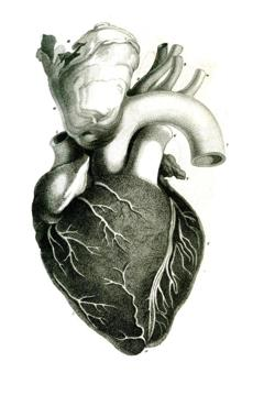 The heart as depicted in the Journal in 1812, the publication's first year.