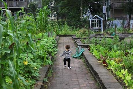 Seventeen-month-old Aydanne Morgan Grant lives in the neighborhood and pranced around a bountiful garden during a party there in August.