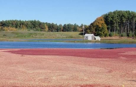 Mayflower's 23-plus acres of cranberry bogs include some with vines planted more than 120 years ago.