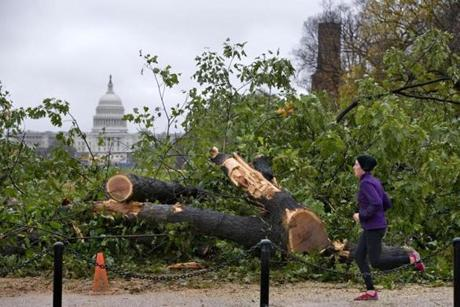 With the Capitol in the background, a jogger passed a fallen large oak tree on the National Mall in Washington.